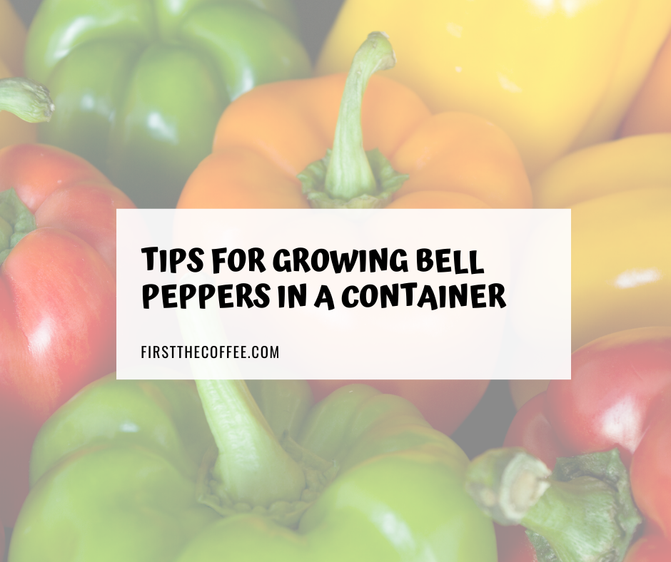 Tips for Growing Bell Peppers In A Container